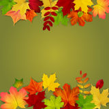 Autumn leaves frame on green background Stock Photos