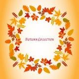 Autumn Leaves Frame Ilustração do vetor Teste padrão abstrato floral Projeto gráfico da forma Símbolo do outono, do eco e de natu Imagem de Stock