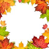 Autumn leaves frame isolated on white background Stock Images