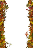 Autumn leaves frame isolated on white background Royalty Free Stock Images