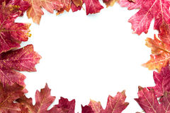 Autumn leaves frame. Multiple autumn leaves isolated on a white background making a frame Stock Photo