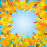 Autumn leaves frame, nature background Stock Photos