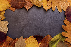 Autumn Leaves Frame no fundo de pedra escuro Autumn Concept Wallpaper Fotos de Stock Royalty Free
