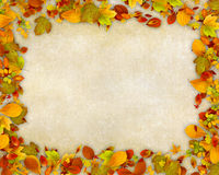 Autumn leaves frame on old paper background Stock Photos