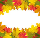 Autumn leaves frame over white for your text Royalty Free Stock Image