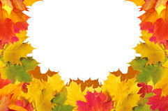 Autumn leaves frame over white for your text Royalty Free Stock Images