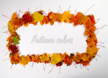 Autumn leaves frame 1 Royalty Free Stock Images