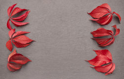 Autumn leaves frame reddish Royalty Free Stock Photography