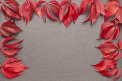 Autumn leaves frame reddish Stock Images