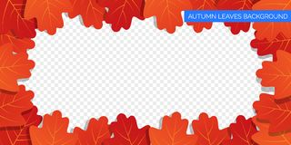 Autumn leaves frame on transparent background. Vector autumnal foliage of oak leaves. Autumn background design Royalty Free Stock Photos