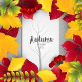 Autumn leaves frame with tree silhouette on center paper. Illustration of Autumn leaves frame with tree silhouette on center paper Stock Photos