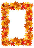 Autumn leaves frame. Vector illustration. Stock Photography