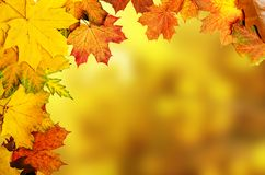 Autumn leaves frame Stock Image