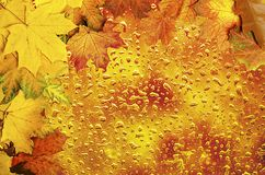 Autumn leaves frame with water drops Royalty Free Stock Images