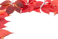 Autumn leaves frame on white Royalty Free Stock Images