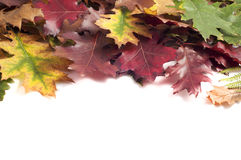 Autumn leaves frame on white background Stock Photography