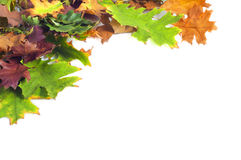 Autumn leaves frame on white background. Red, brown, orange and green autumn leaves frame on white background Stock Image