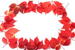 Autumn leaves frame on white background Royalty Free Stock Photography