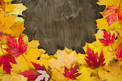 Autumn leaves frame on wood background Stock Photos