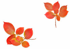 Autumn leaves frame for your text Stock Photo