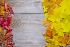 Autumn leaves framed background Royalty Free Stock Images
