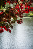 Autumn leaves framing background of lake water Stock Image