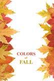 Autumn leaves framing copy space royalty free stock image