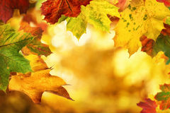 Autumn leaves framing a nice bokeh background Royalty Free Stock Images