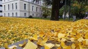 Autumn leaves in front of a university Royalty Free Stock Photo