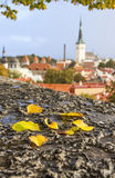 Autumn leaves in front of view to city of Tallinn, Estonia Stock Images