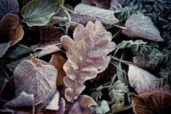 Autumn Leaves Frozen Artmif.lv Stock Photos