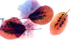 Autumn leaves frozen Royalty Free Stock Photos