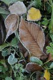 Autumn leaves on frozen grass Royalty Free Stock Photography