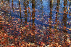Autumn leaves frozen in ice Royalty Free Stock Photos