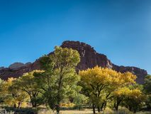 Autumn leaves Fruita in Capitol Reef National Park, Utah. US Stock Image