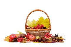 Autumn leaves and fruits Royalty Free Stock Image