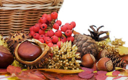 Autumn leaves and fruits Stock Photos