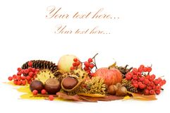 Autumn leaves and fruits. Isolated on white royalty free stock photography