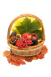 Autumn leaves and fruits Stock Image