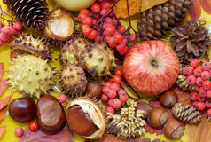 Autumn leaves and fruits. background Royalty Free Stock Images