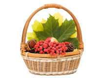 Autumn leaves and fruits in basket Royalty Free Stock Image