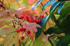 Autumn leaves and fruits Stock Images