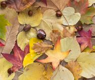 Autumn leaves and fruits Stock Photo