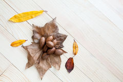 Autumn leaves and fruits Royalty Free Stock Images