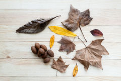 Autumn leaves and fruits Royalty Free Stock Photo