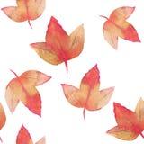Autumn Leaves Fundo floral da aquarela Imagem de Stock