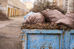 Autumn leaves in a garbage Royalty Free Stock Photography