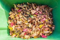 Autumn Leaves in Garbage Can Stock Photo