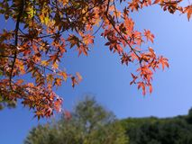 Autumn leaves in the Garden of morning calm with blue sky background Royalty Free Stock Photography