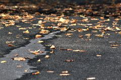 Autumn Leaves Gathering on the Driveway royalty free stock photo